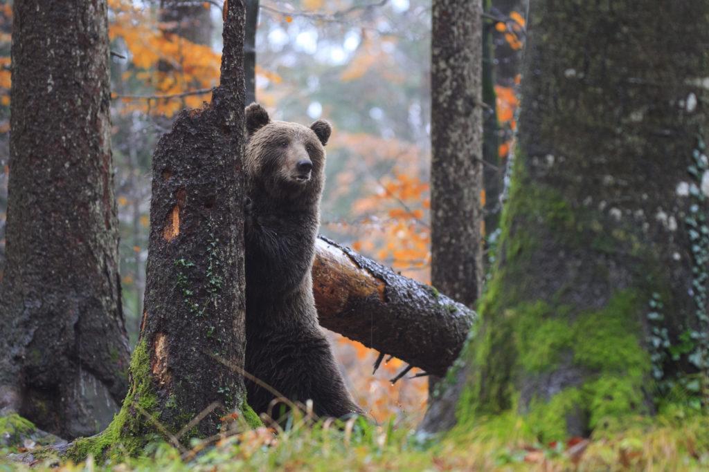 visit-goodplace-wildlife-watching